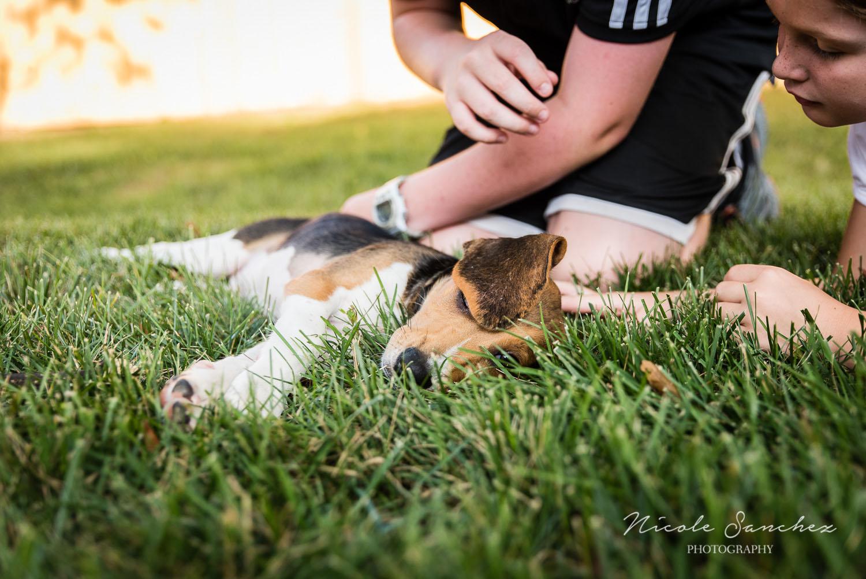 Family_Documentary_Backyard_Dogs_4.jpg