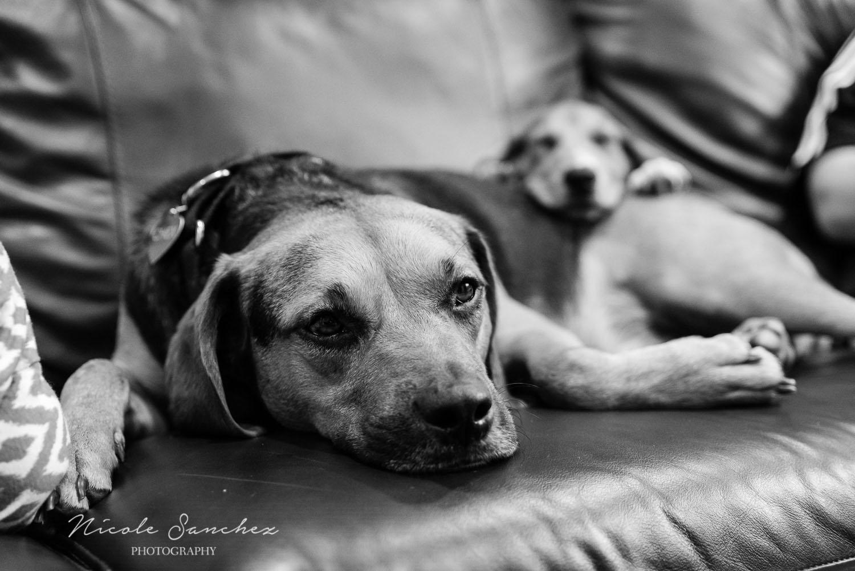 Family_Documentary_Backyard_Dogs_12.jpg