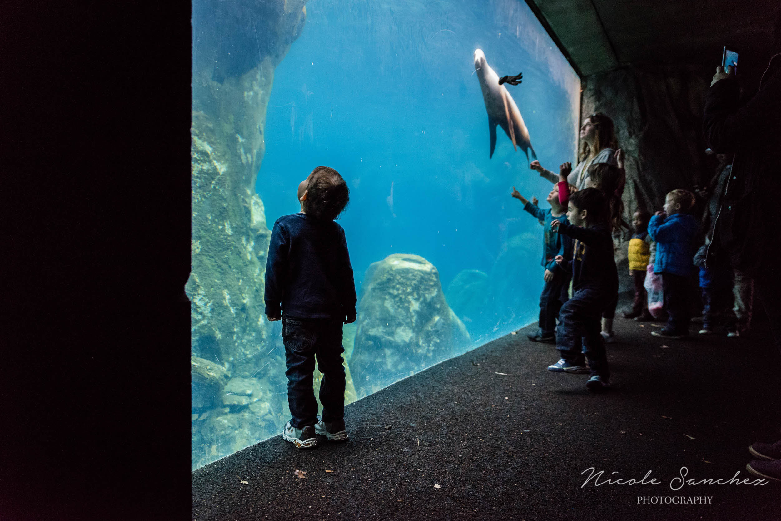 Boy looking into aquarium at the National Zoo by Washington, D.C. Family Photographer Nicole Sanchez