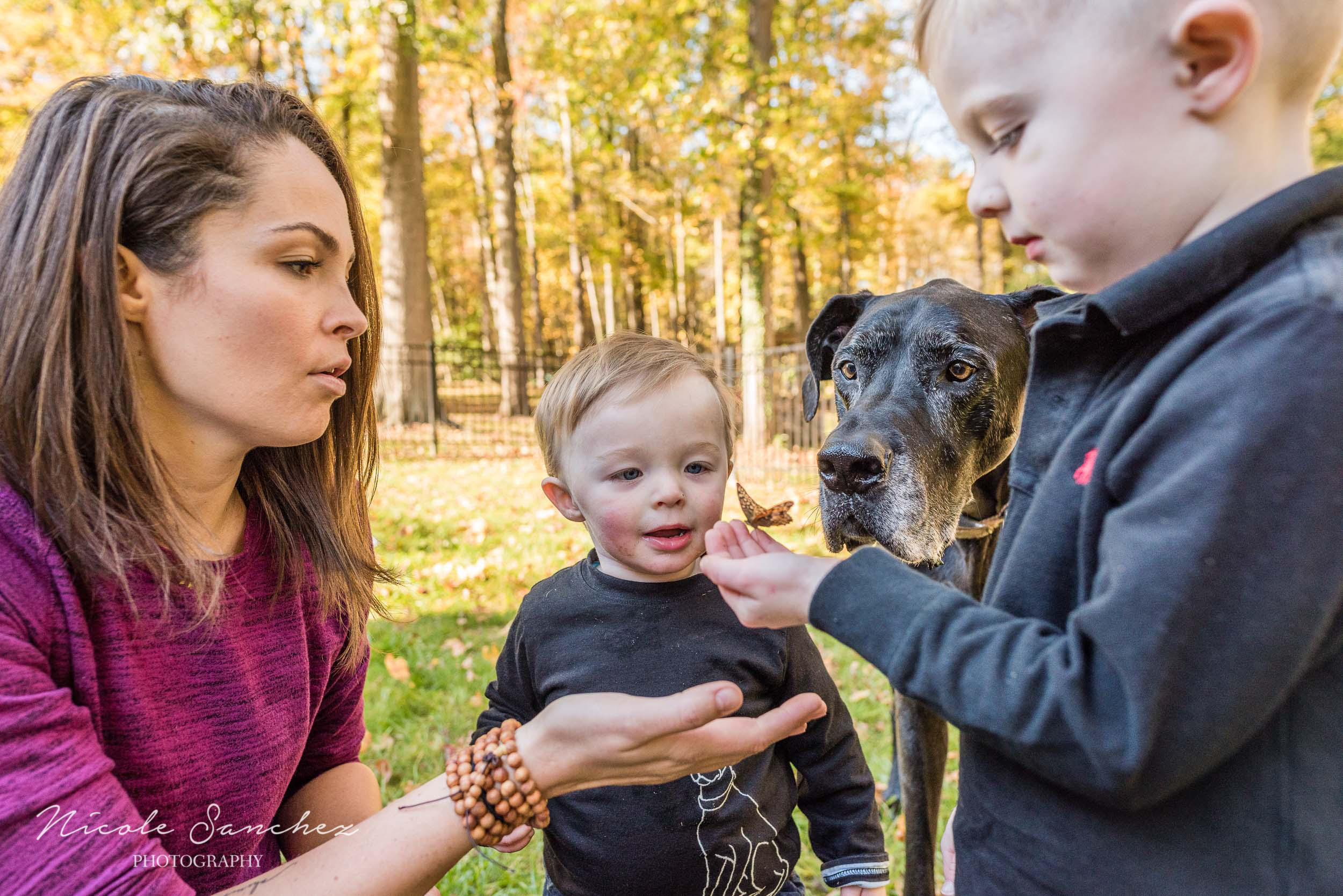 Young boy gently holding butterfly at outdoor family session in Alexandria, VA by Lifestyle Family Photographer Nicole Sanchez