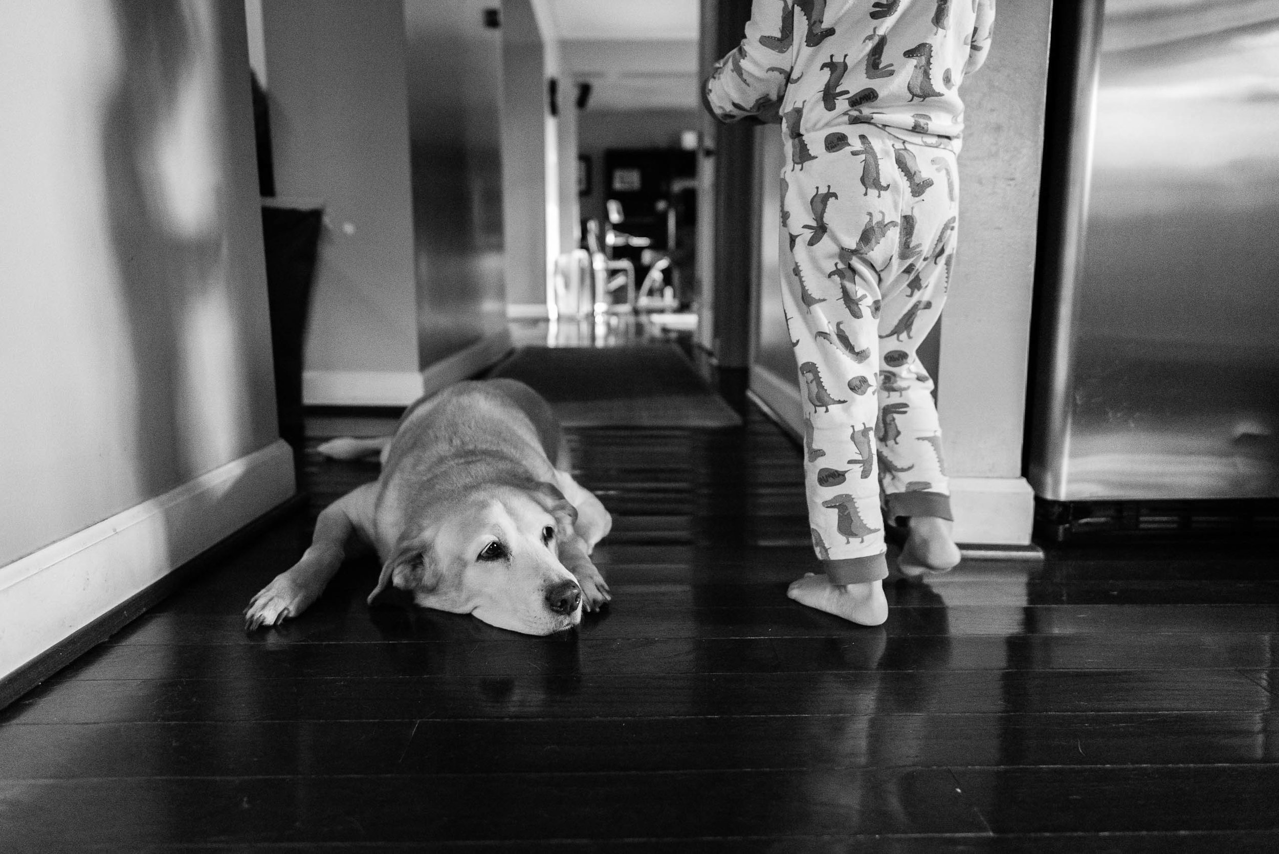Dog on floor with boy in pajamas by Northern Virginia Family Photographer Nicole Sanchez