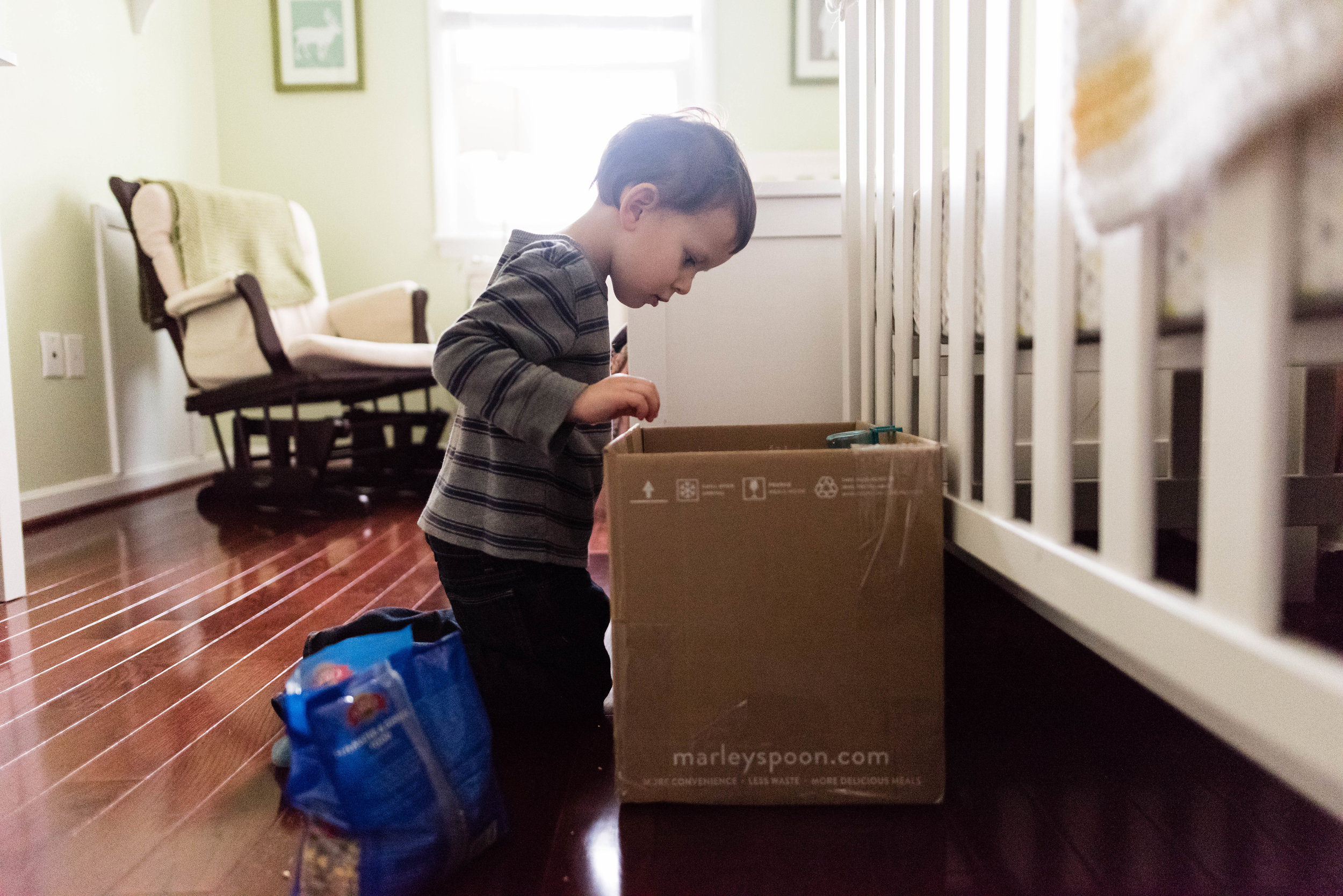 Boy looking into hamster box by Alexandria, Virginia Family Photographer Nicole Sanchez