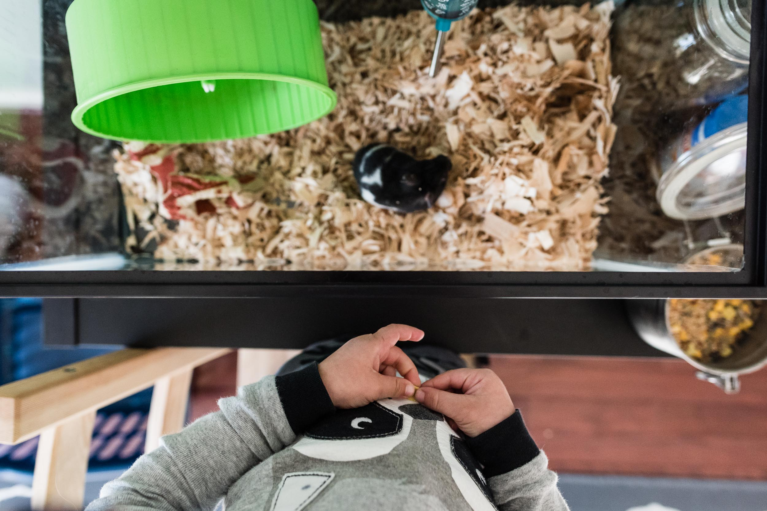 Boy waiting to feed pet hamster by Northern Virginia Family Photographer Nicole Sanchez