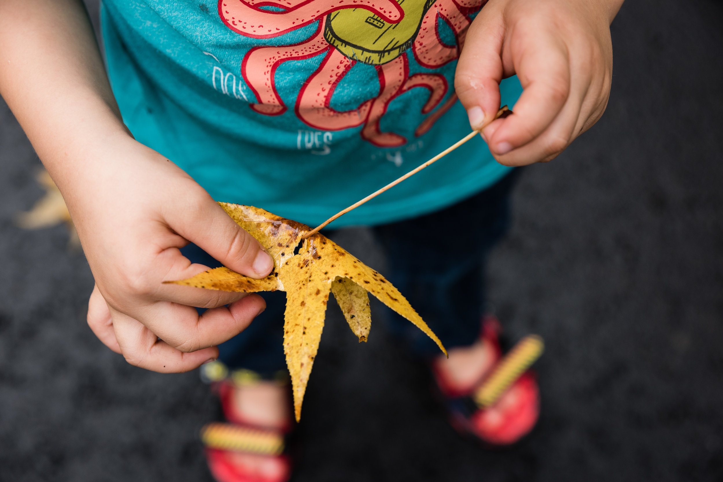boy playing with autumn leaf by northern virginia family photographer nicole sanchez