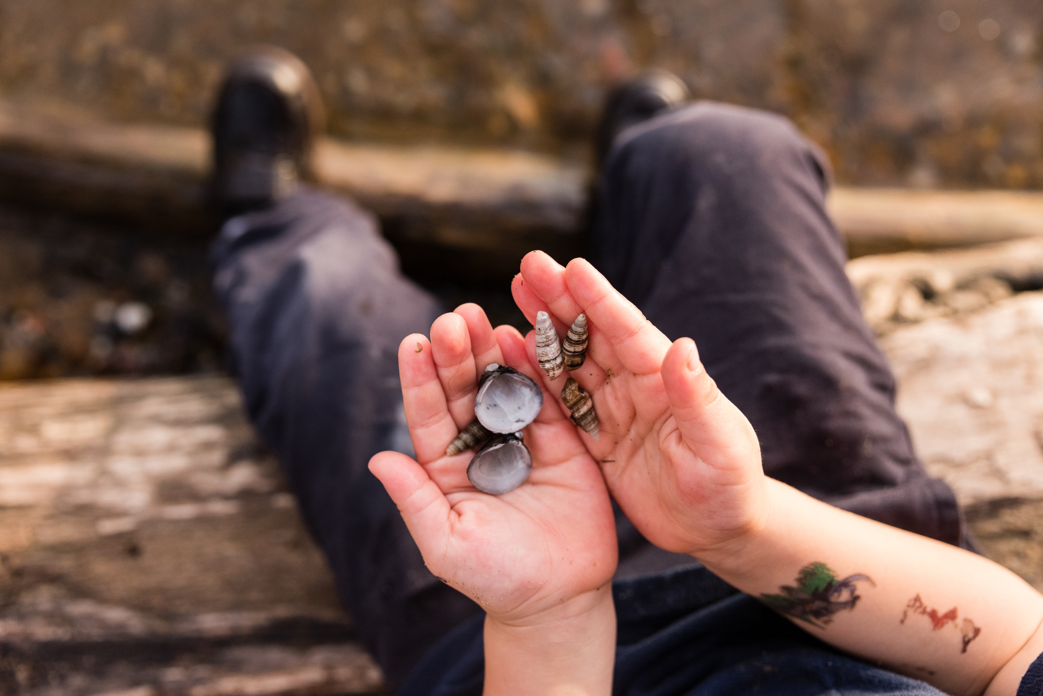 Boy holding shells at Potomac River by Northern Virginia Family Photographer Nicole Sanchez