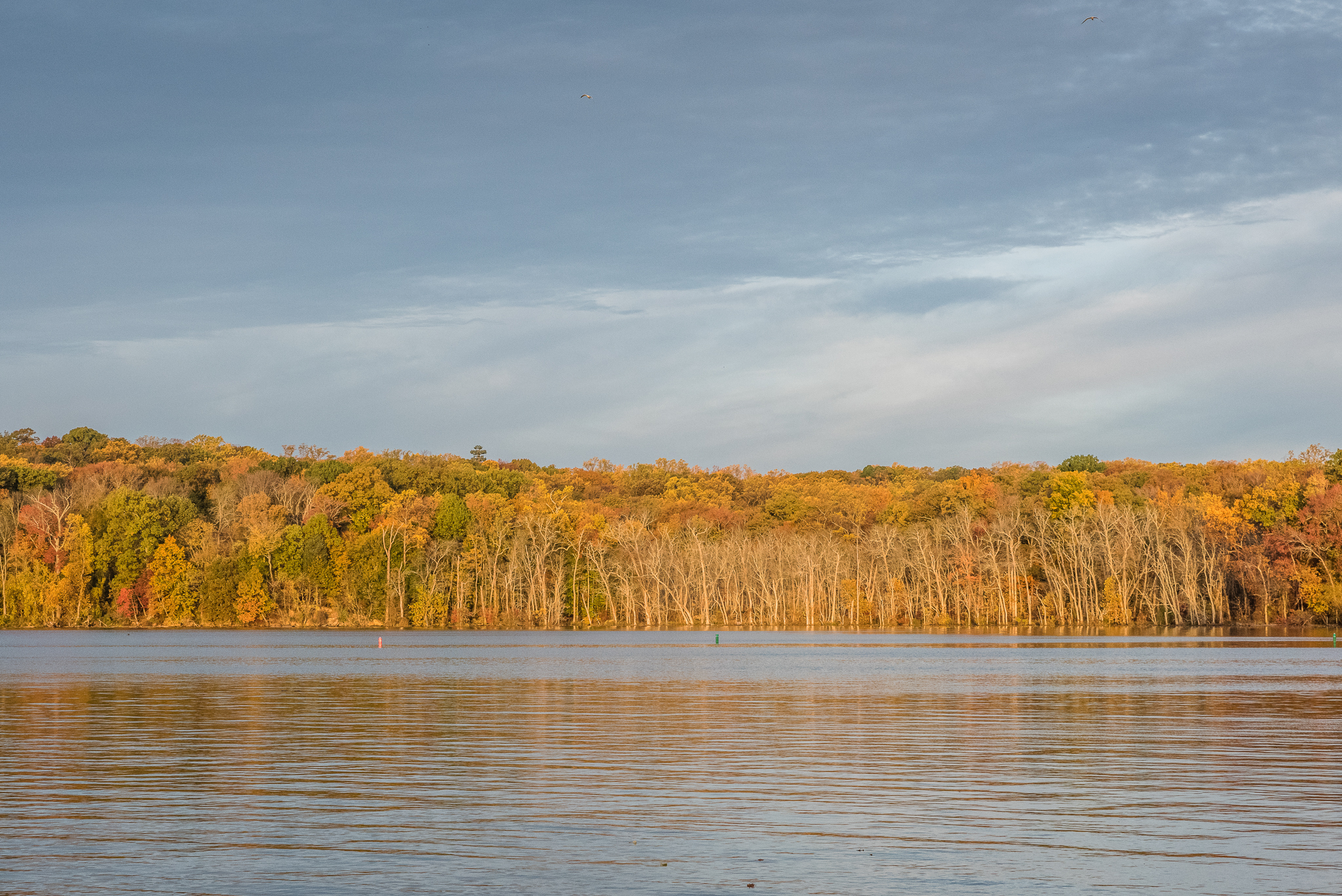 Potomac River Landscape in the fall by Northern Virginia Family Photographer Nicole Sanchez