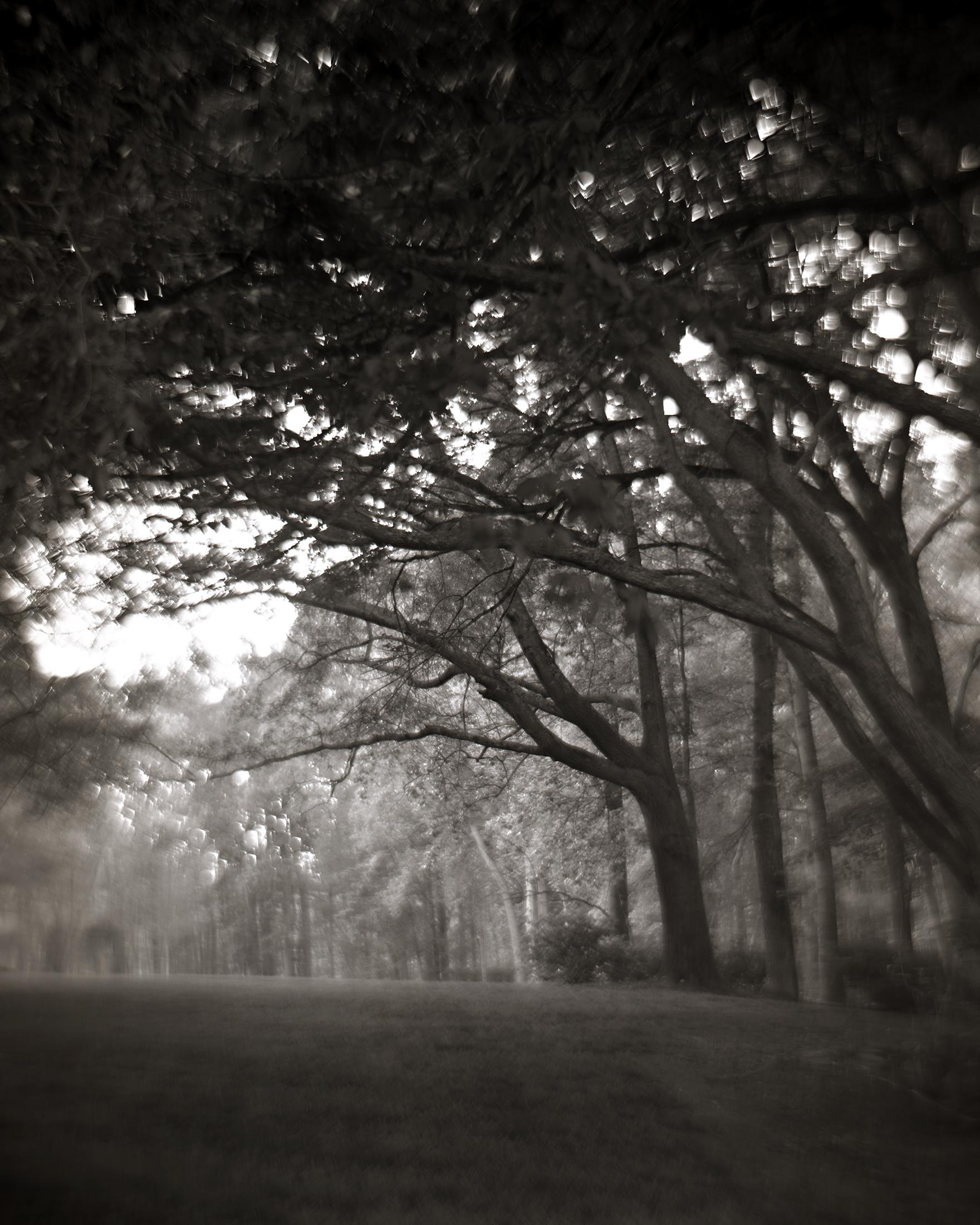 TREES BENDING TOWARDS THE LIGHT