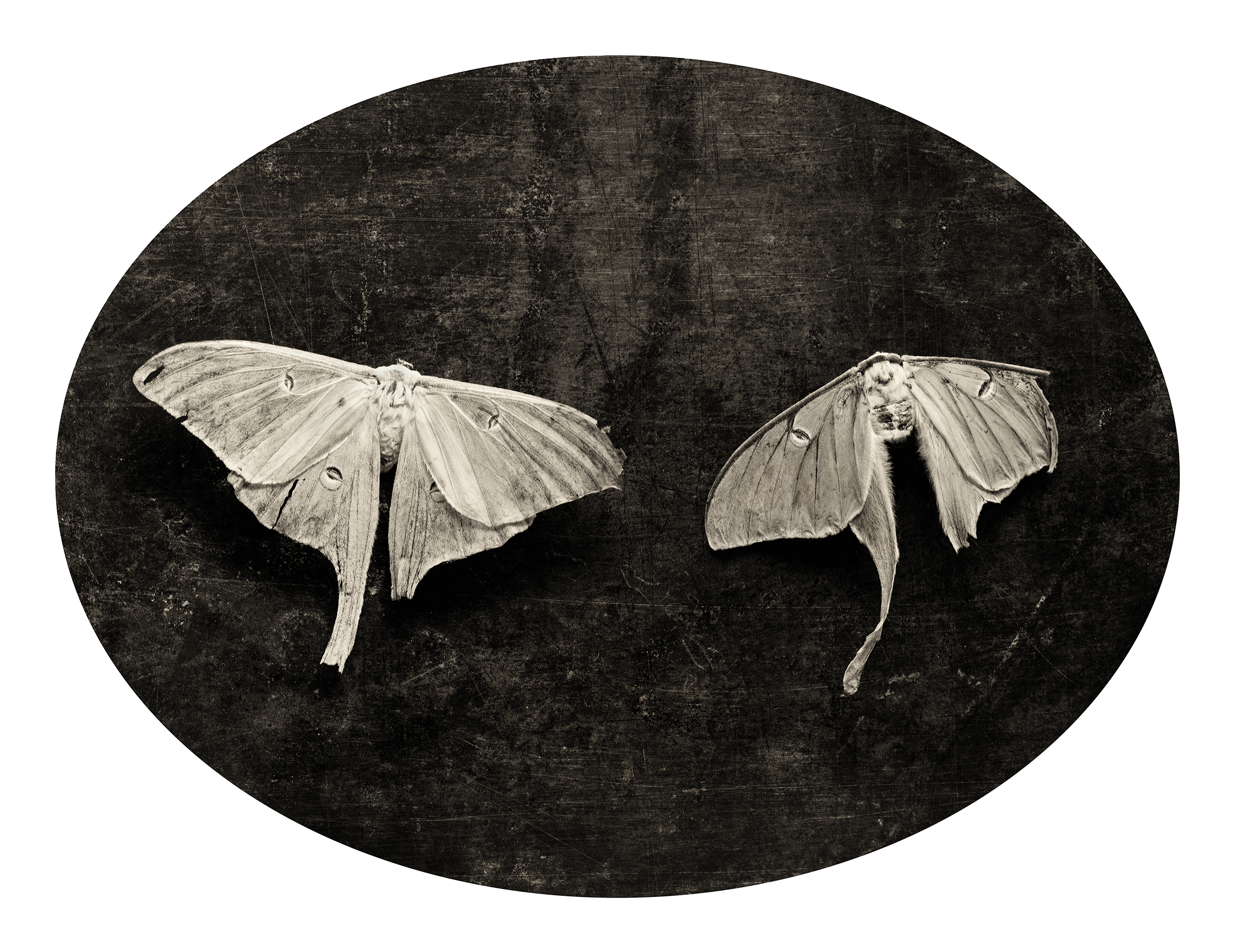 SOULMATE MOTHS