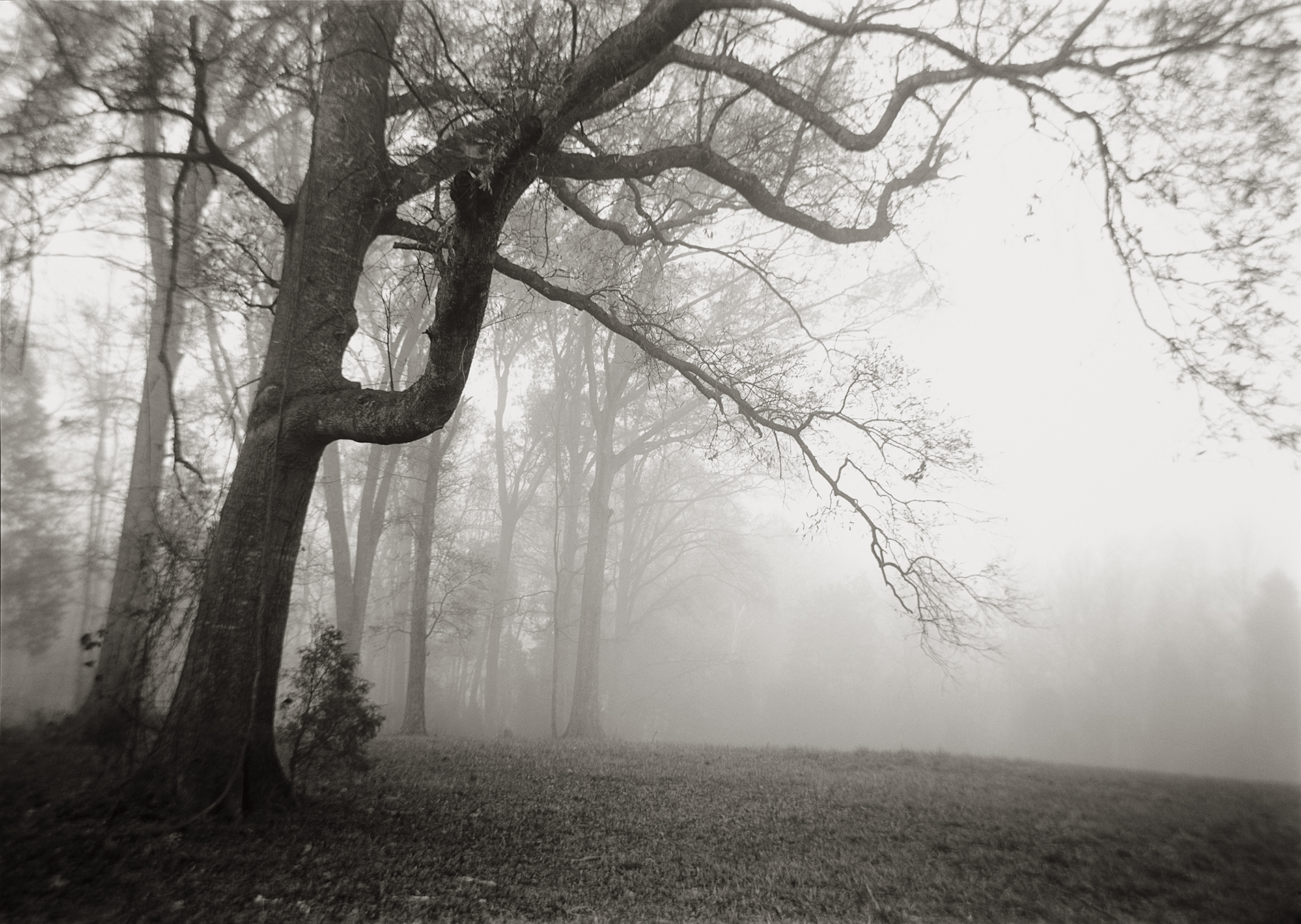 From Grounded - Branches in Fog 300 dpi.jpg