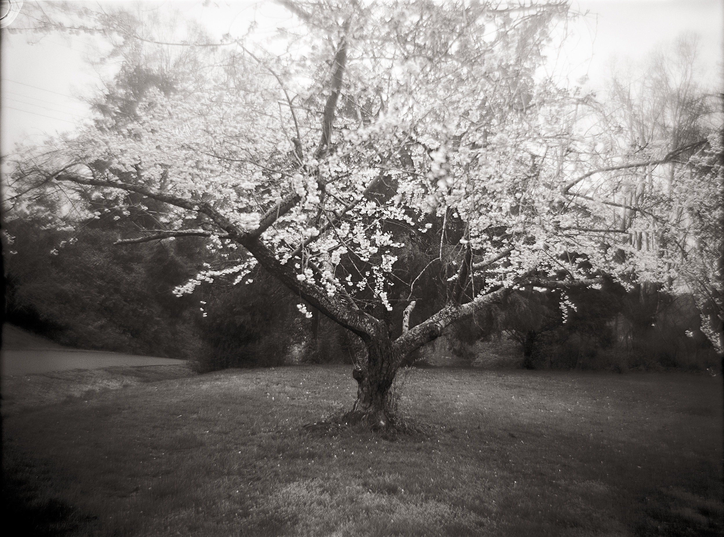 From Grounded - Cherry Tree - 300dpi.jpg