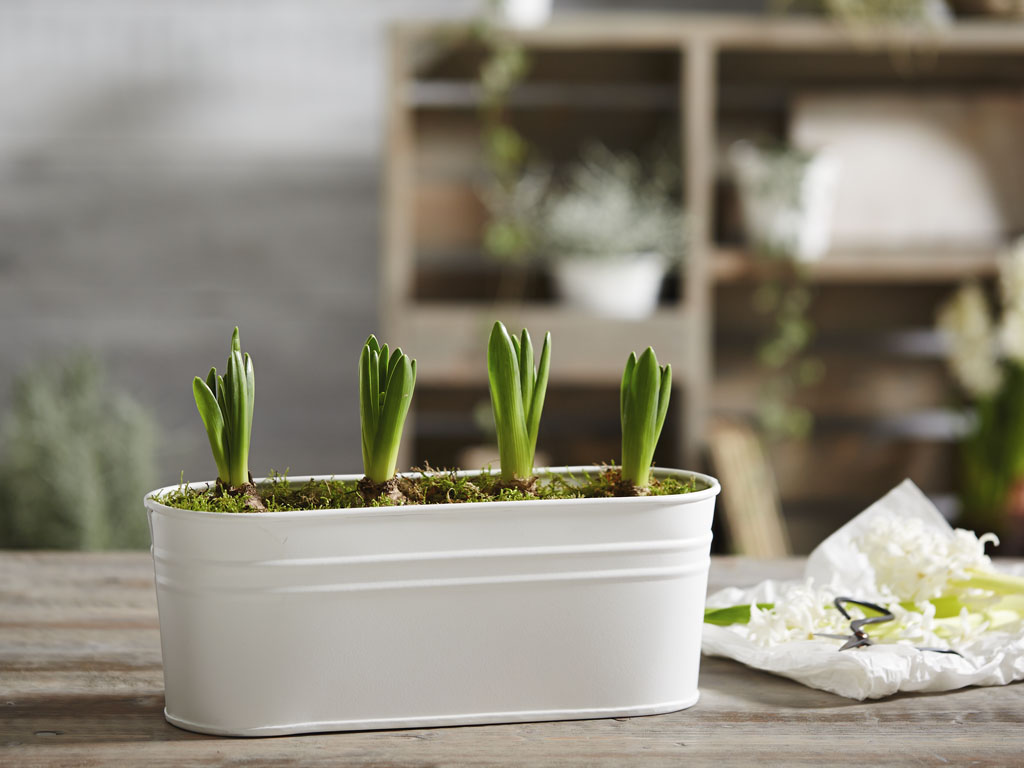 bloomsbury-planter