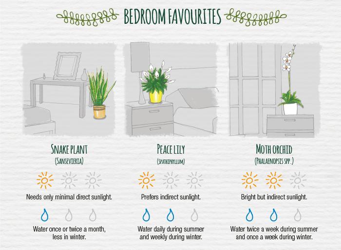 The indoor plant care cheat sheet — Modern Gardens Magazine