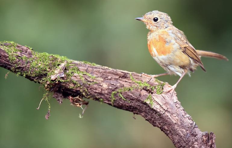 finding a baby bird shutterstock_547536445 small.jpg