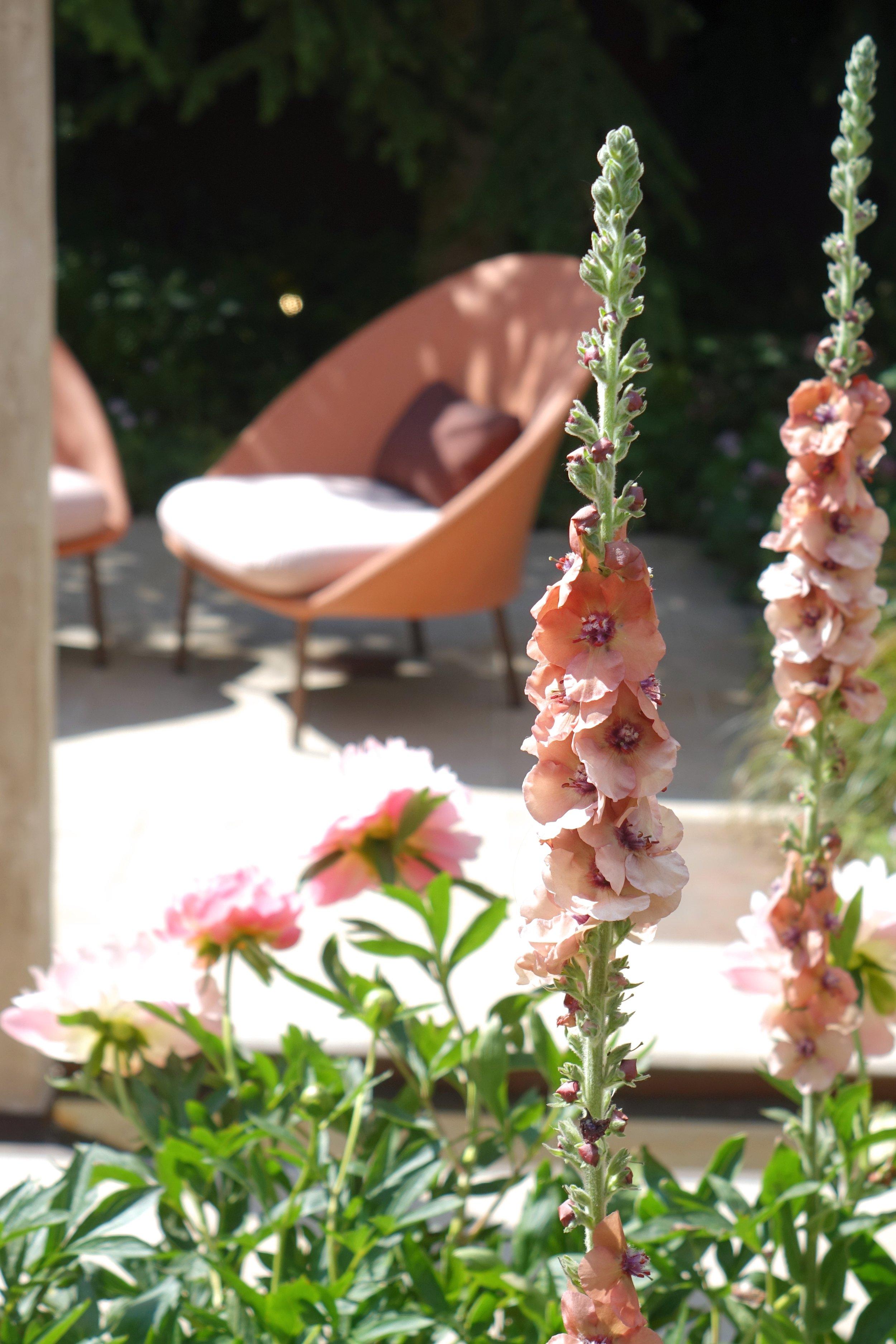 9. Dusky peach - Jo Thompson Garden - Wedgewood.jpg