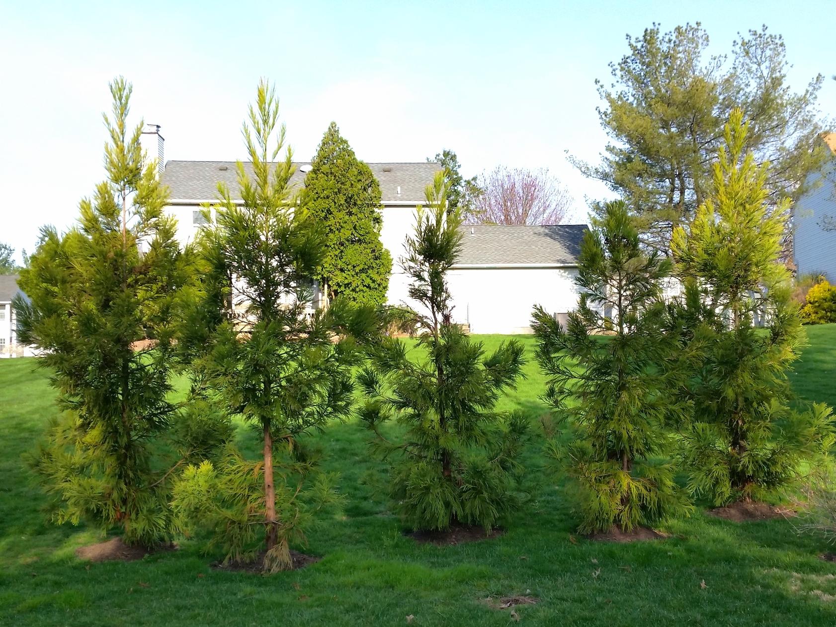 Pivacy, Buffer & Solar Energy Plantings