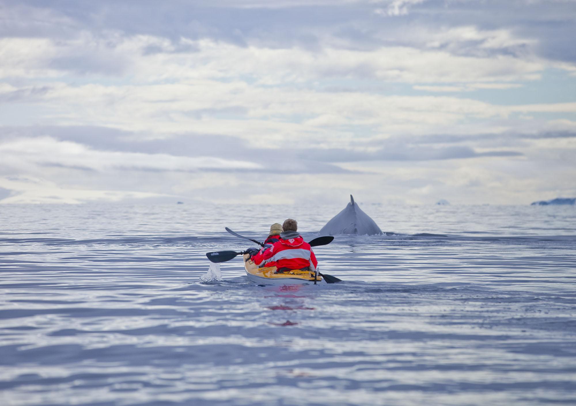 Kayak_Whale_9223.jpg