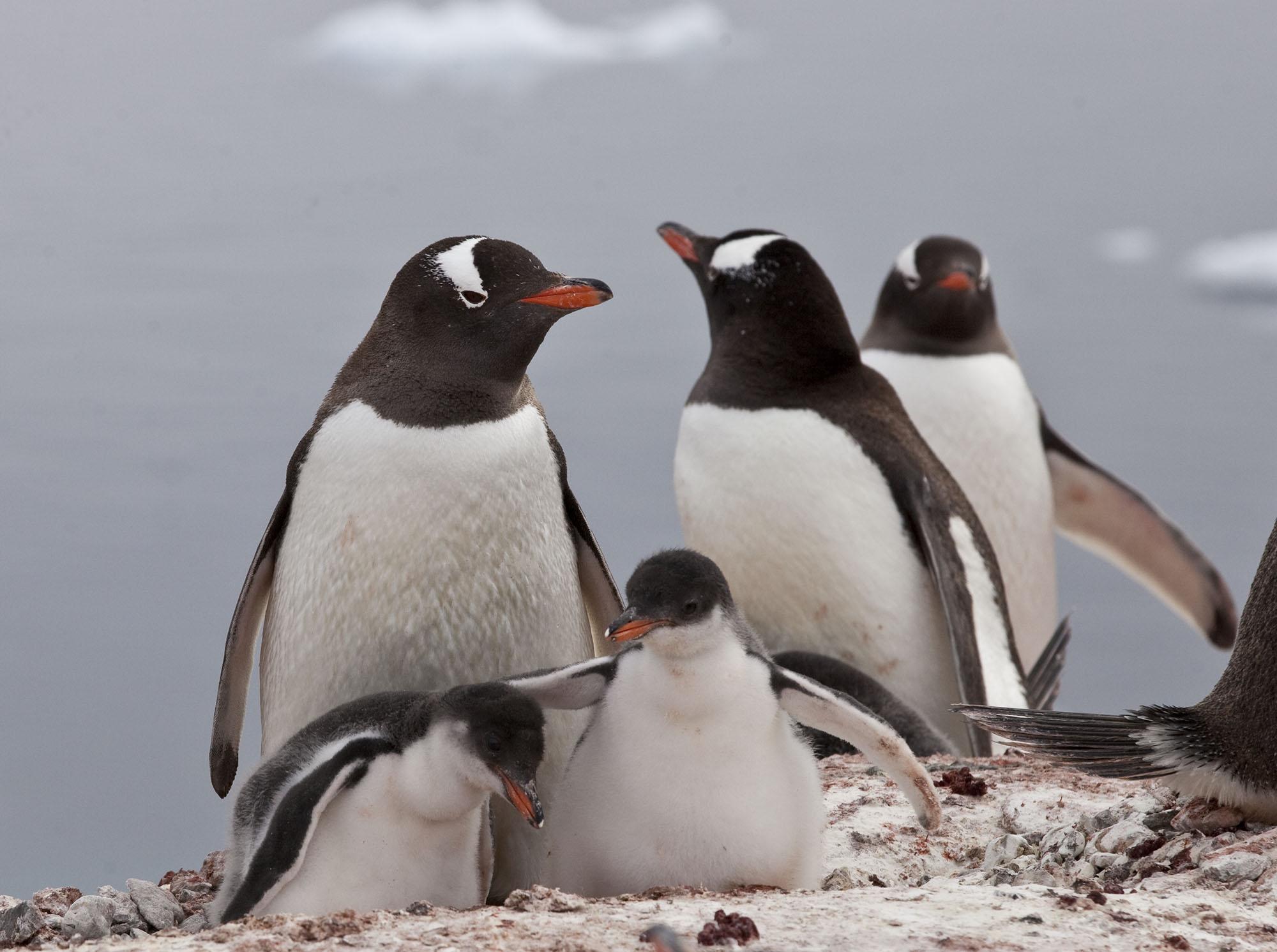 Penguins_8425.jpg