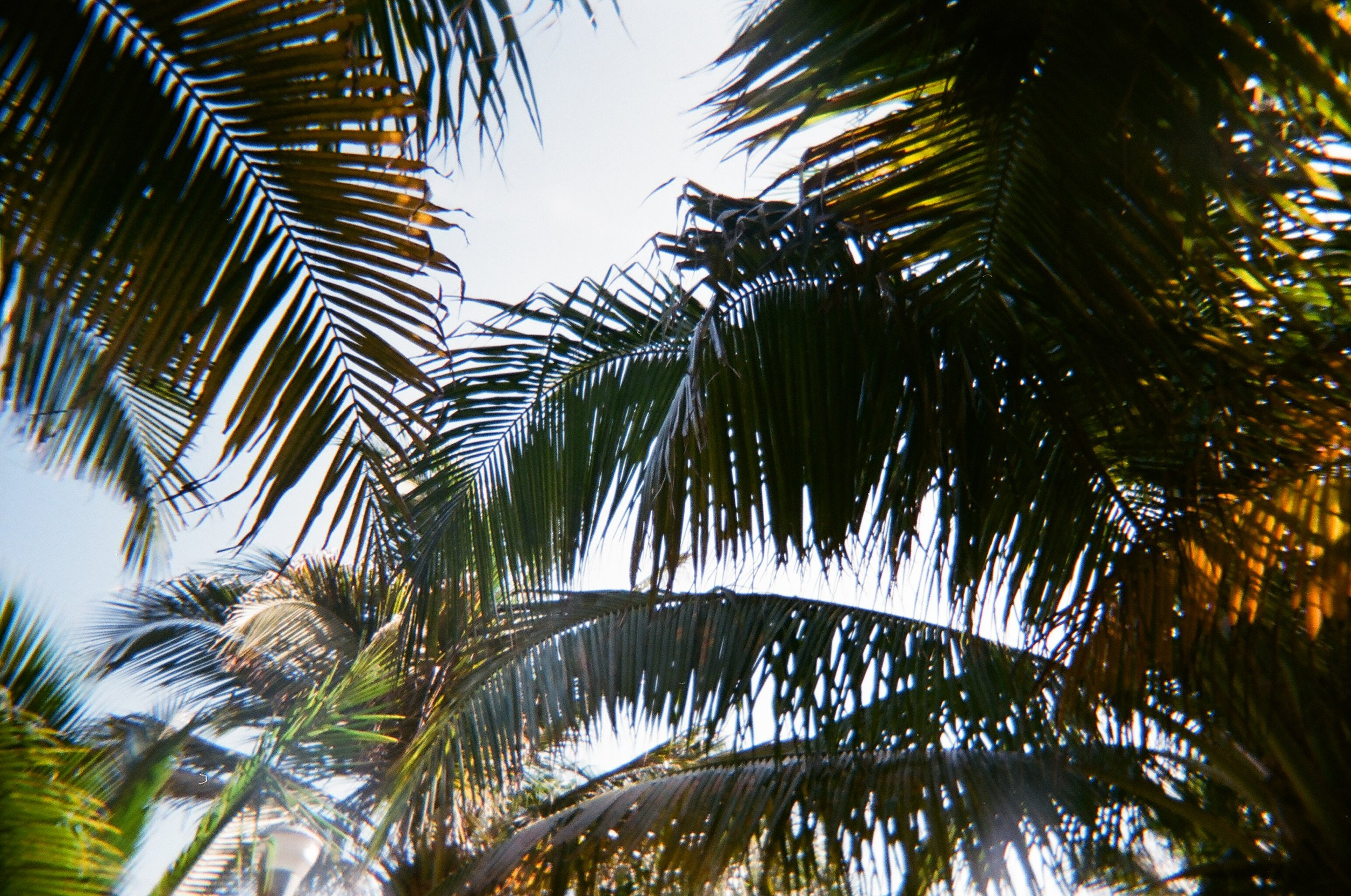 looking up through the palm tress on the beach