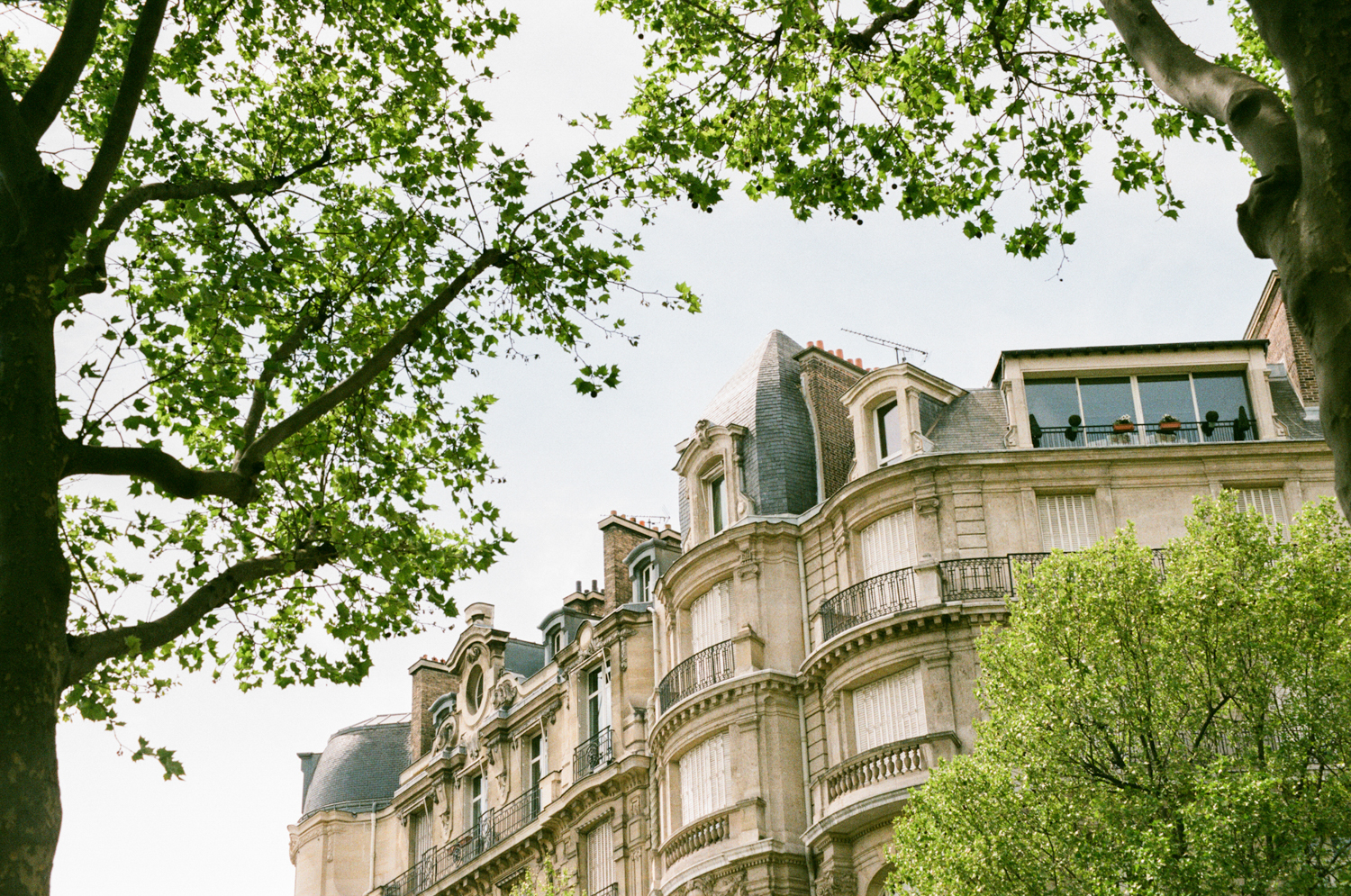 gorgeous trees framing a stunning building in Paris