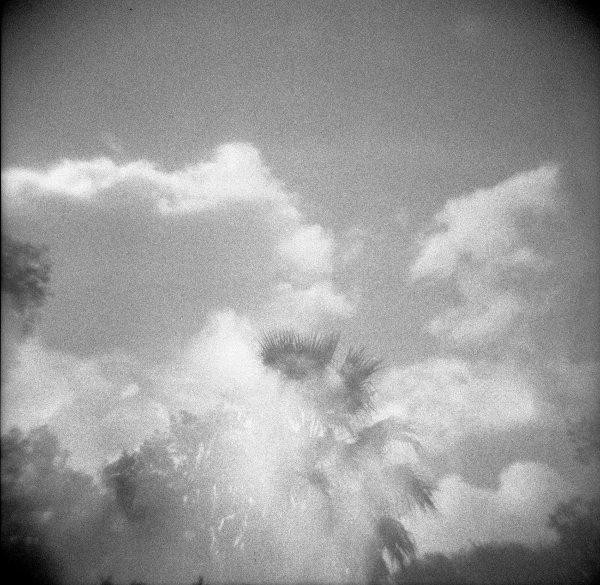 Ilford Delta 3200 and Holga, double exposure outdoors