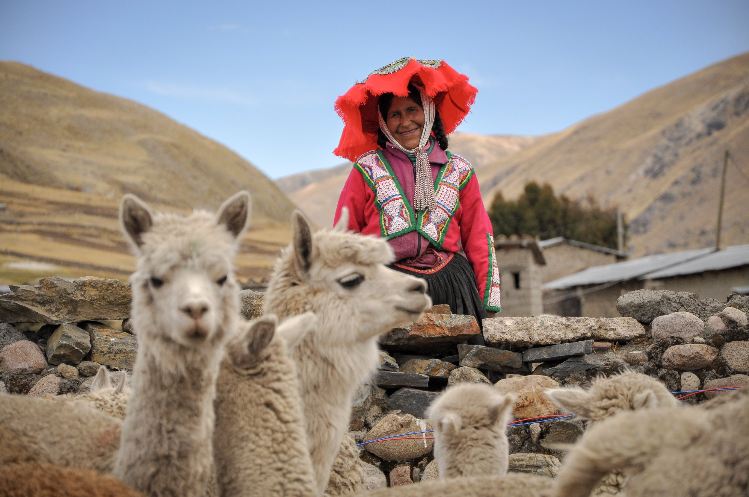 Our artisans work mostly with Huacaya alpaca, as they adapt easily to the extreme climate at 13,000 ft.