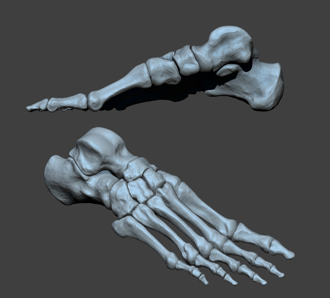 I resculpted all of the foot bones from the existing model