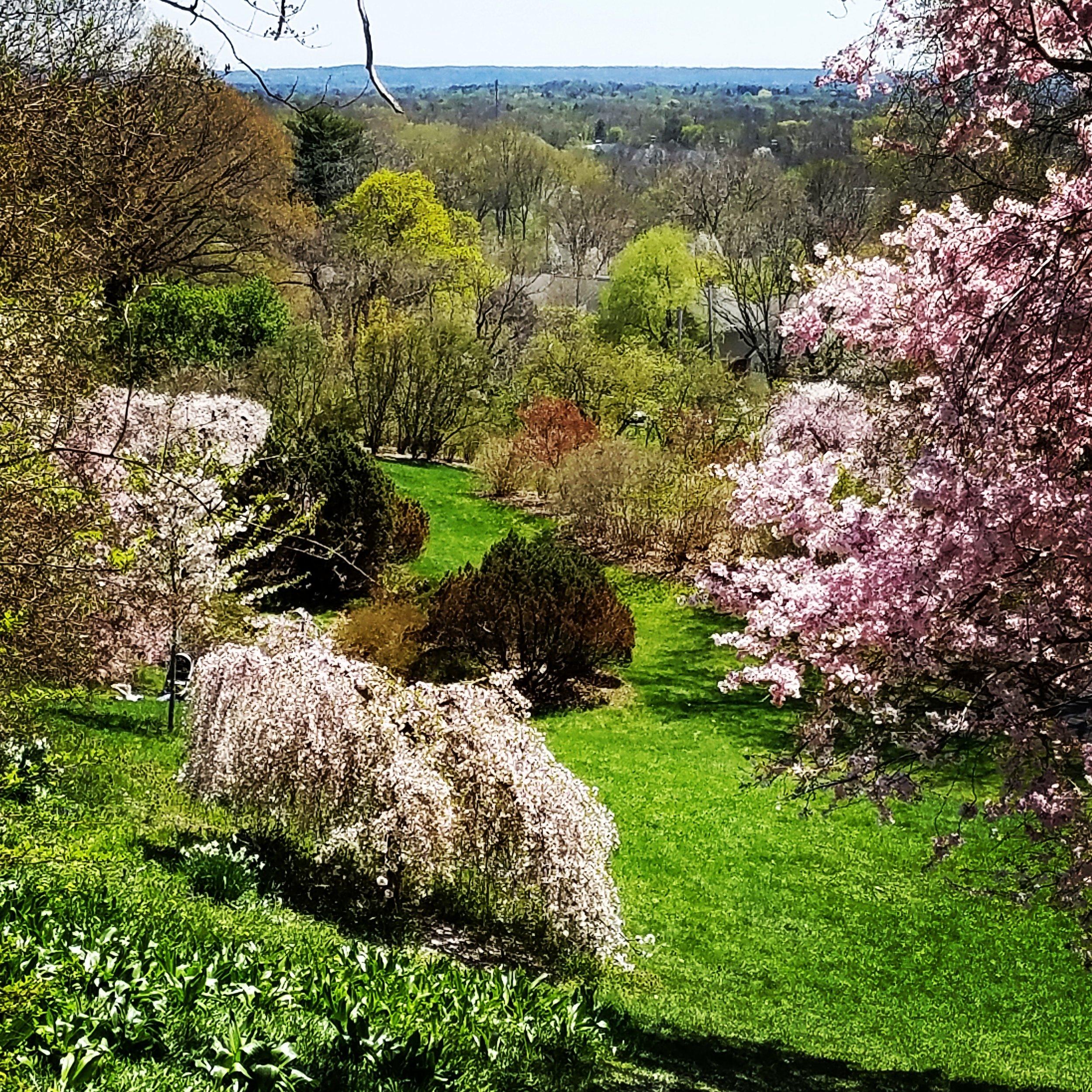 Cherry Hills in Background.jpg
