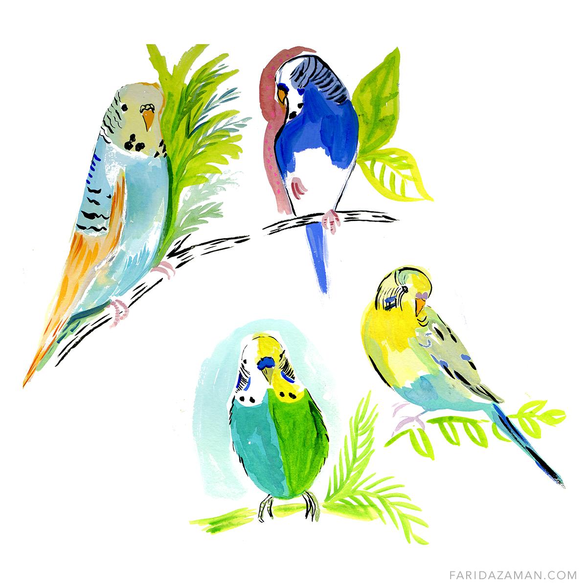 Parakeets 150.jpg