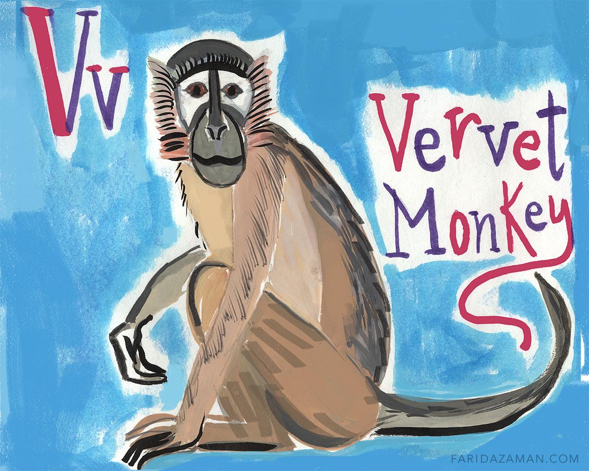vervet monkey150.jpg