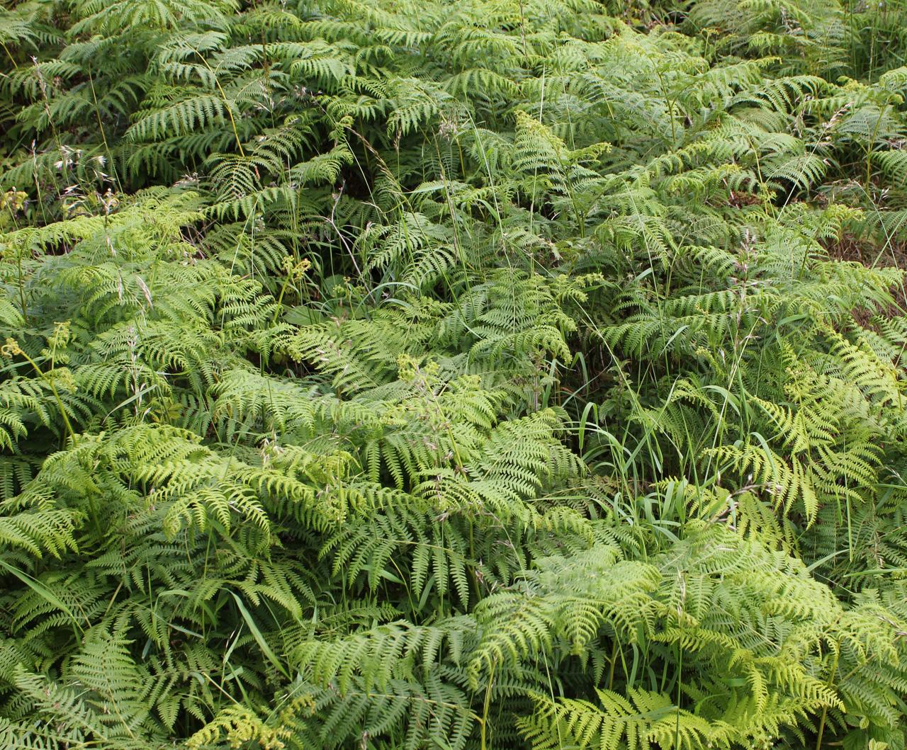 Fern Landscape _ laura phelps rogers - floral ideas1.jpg