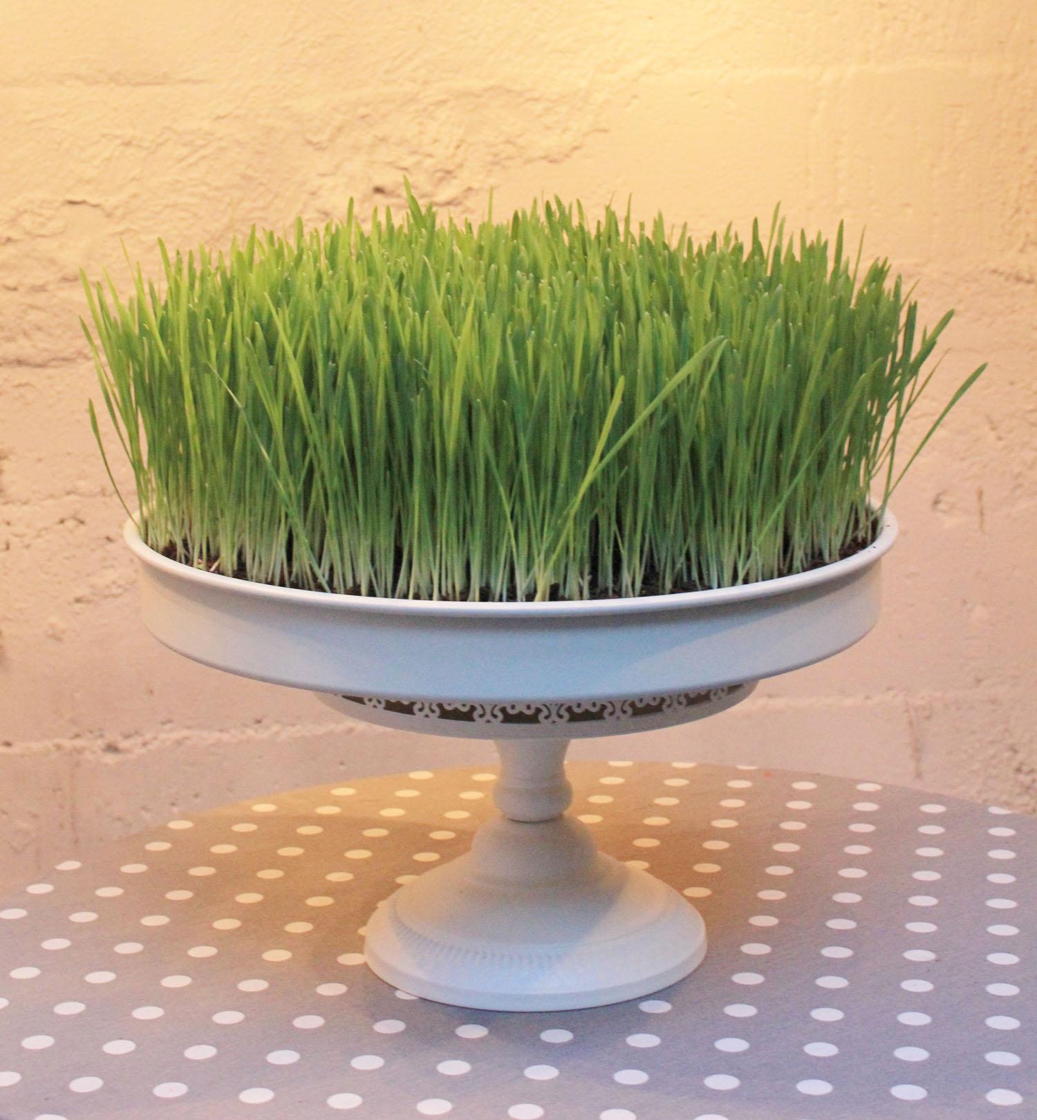 Custom Grass Cake by Laura Phelps Rogers 3240design llc.jpg