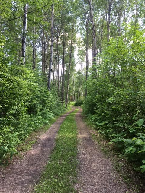 Ringing Cedars-Laneway.jpg