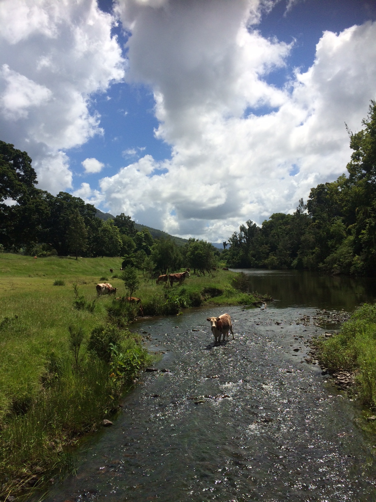 Quick dip in the creek with the cows. What a great way to de-stress.