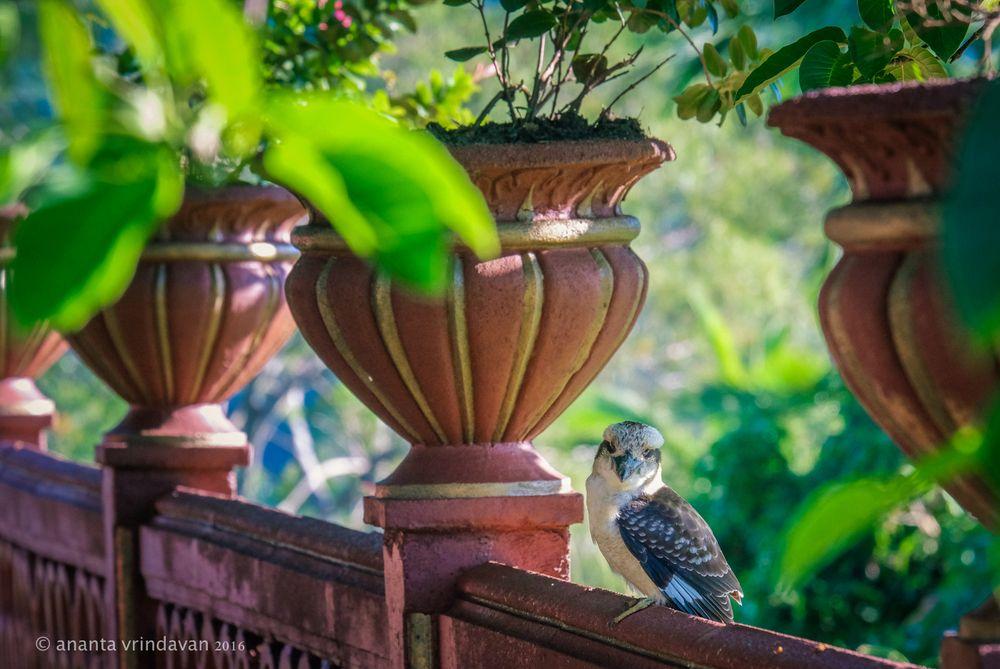 Krishna-Village---Bird.jpg