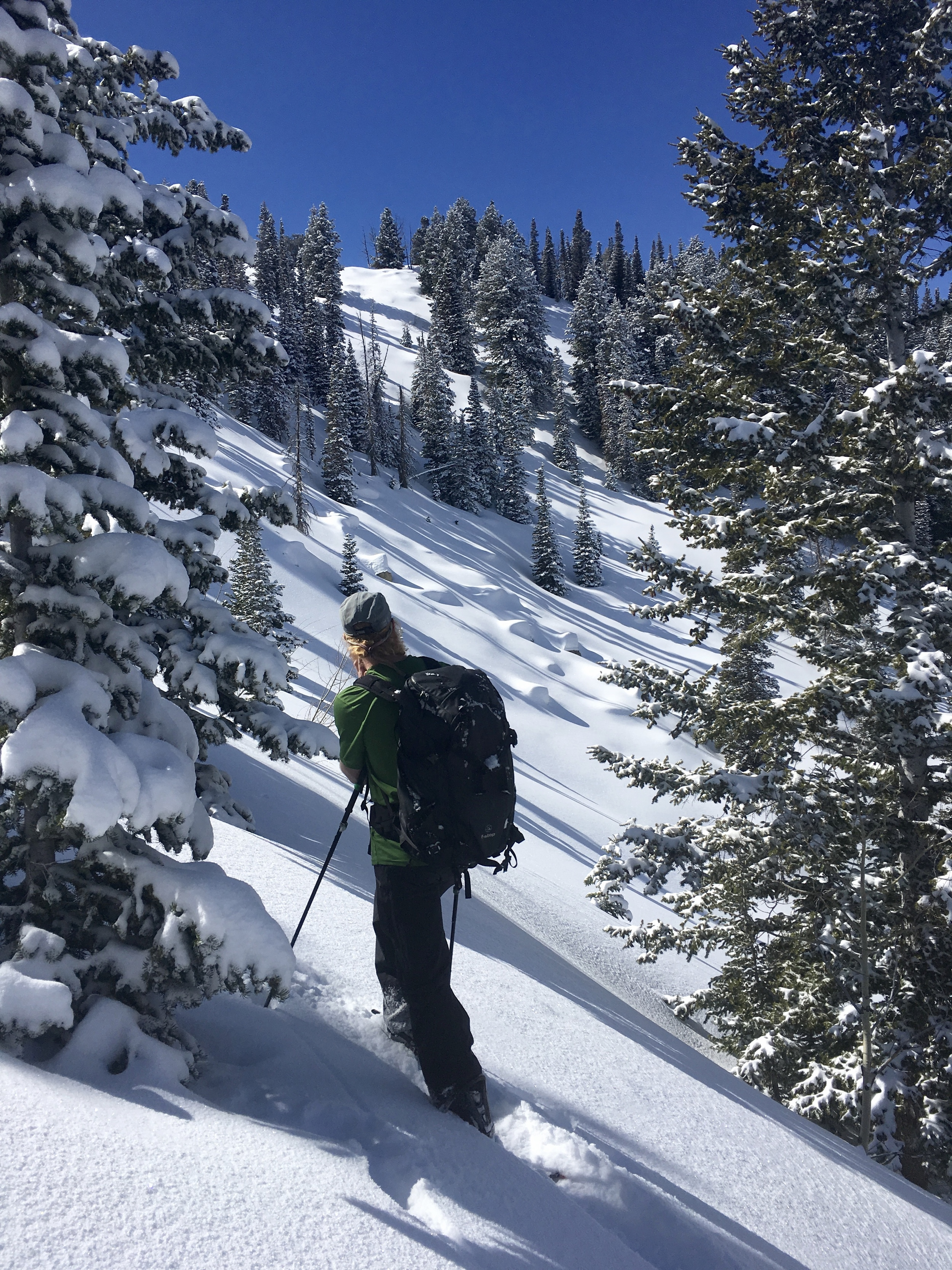 Photo: Gazing into some hits in Silver Mine Meadow     Big Cottonwood Canyon, UT