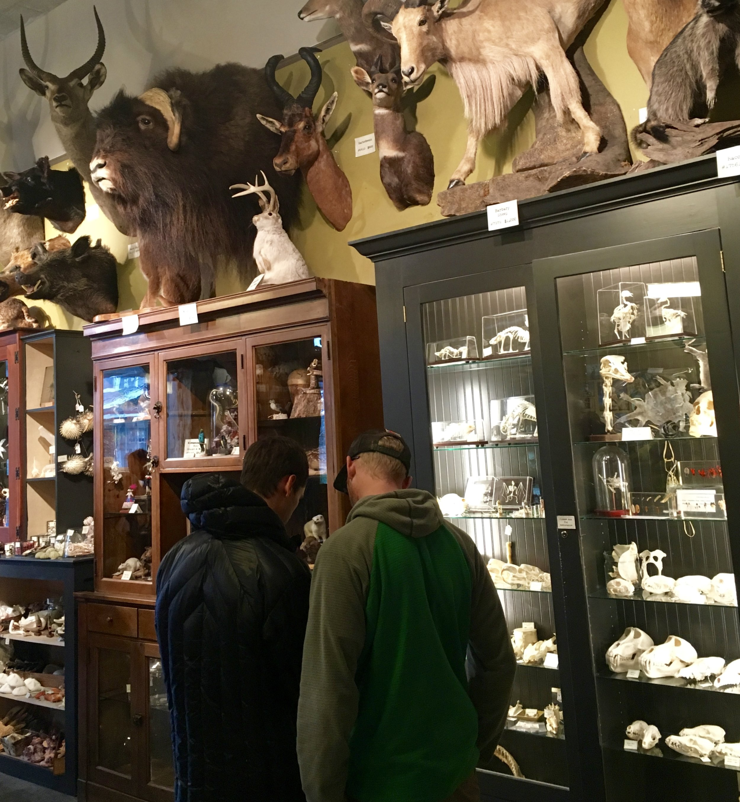 Paxton Gate- Checked out this taxidermy place in Portland.  Photo: Zach Husted