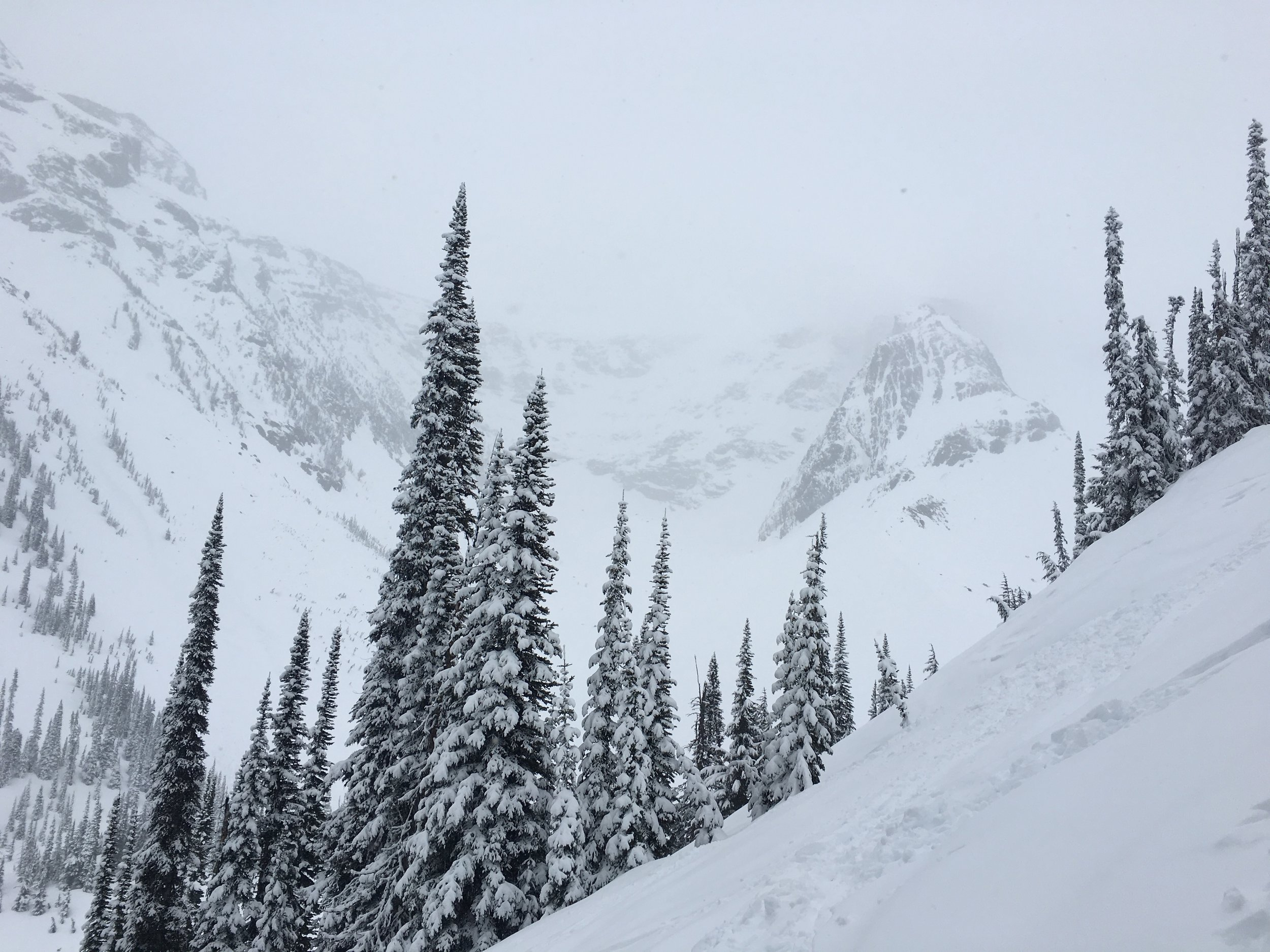 Shot from Triangle Trees looking up at Youngs Peak, hiding in the upper right.  Photo: Zach Husted