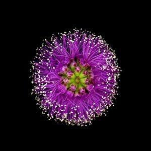 xmUnidentified+Bush+Flower+-++small+(1) (1).jpg