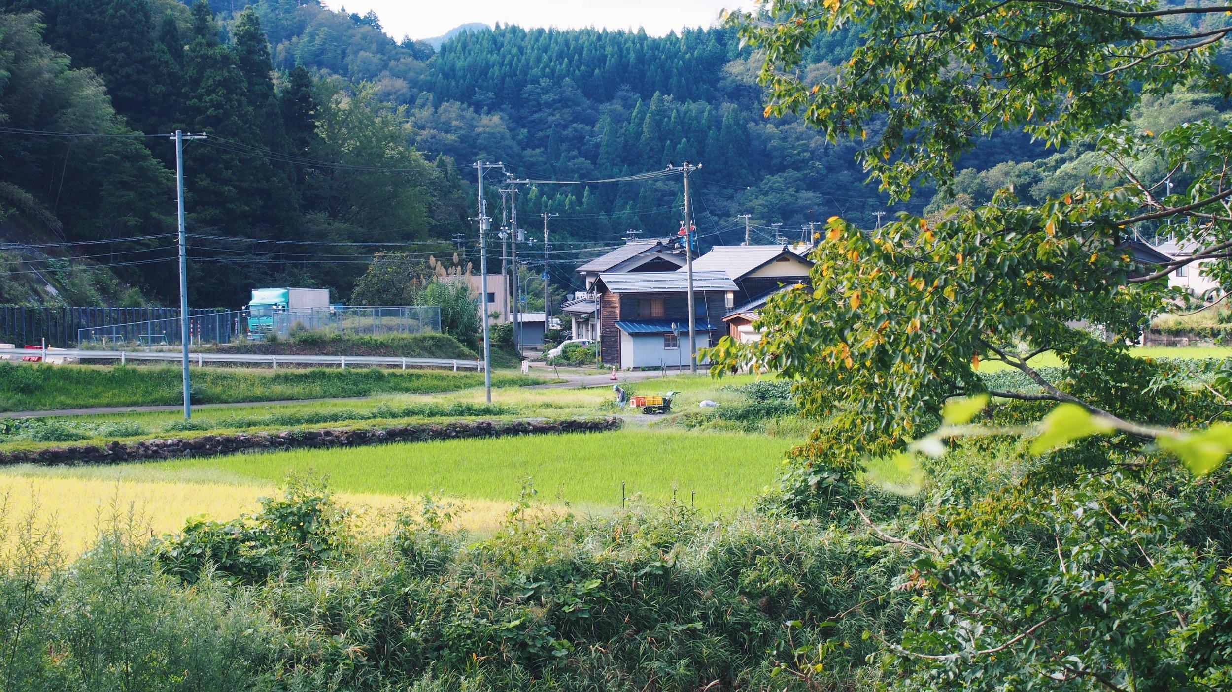 Japanese countryside, green field, jet program