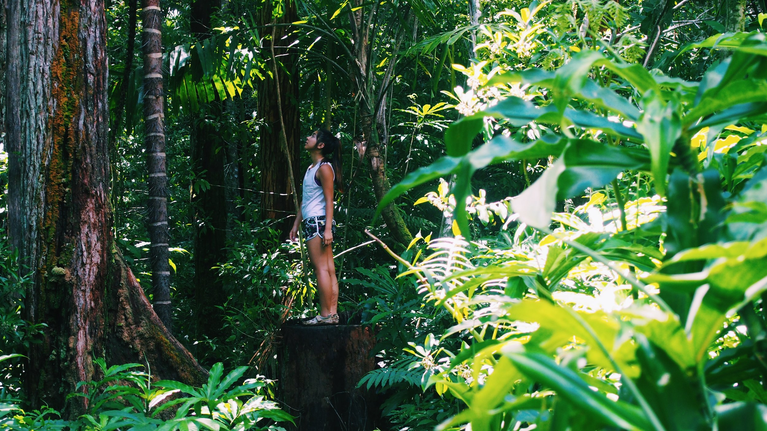 girl in a tropical rainforest in hawaii