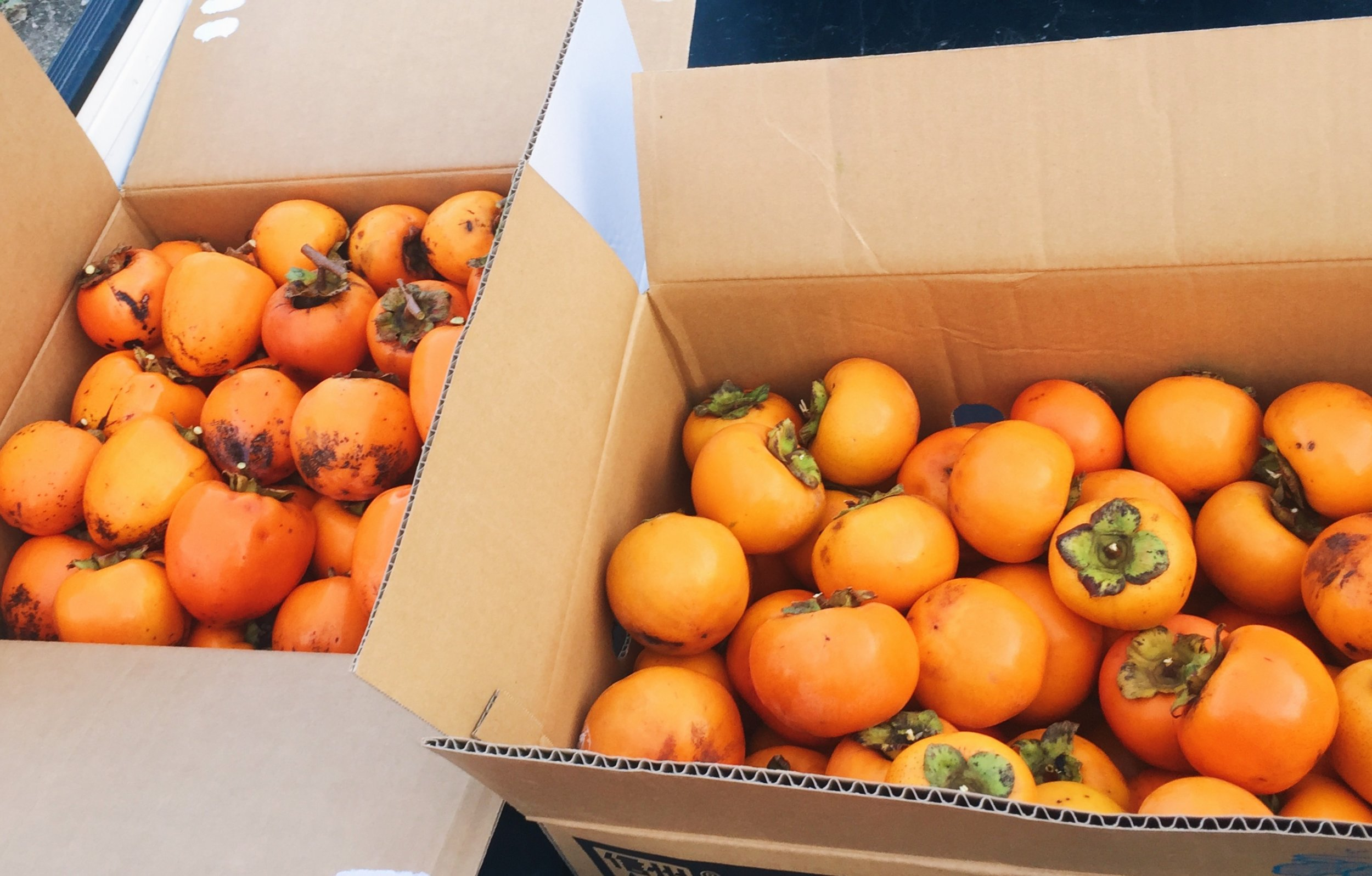 Boxes of fuyu and hachiya persimmons