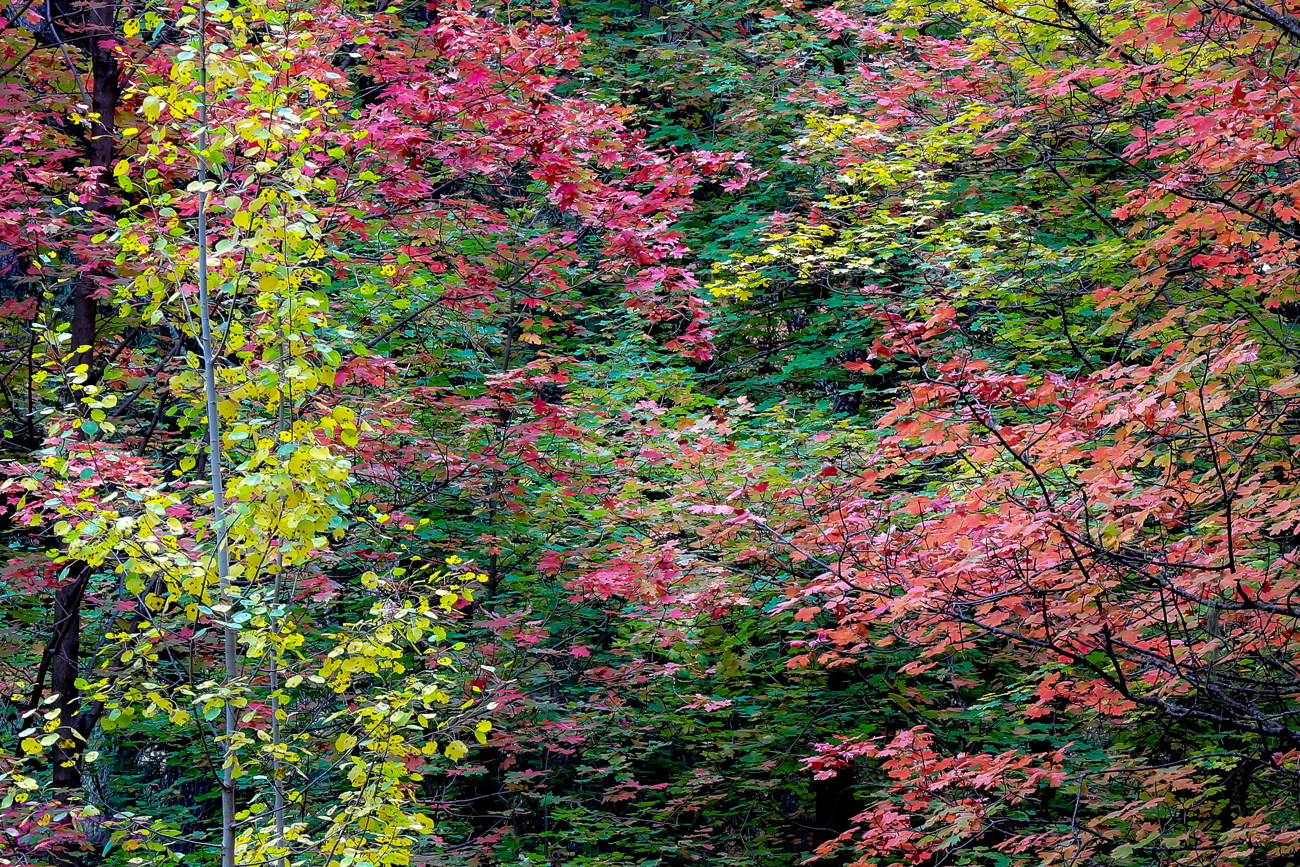 Fall Colors Mt. Lemmon Tucson Arizona Landscape Photographer 05