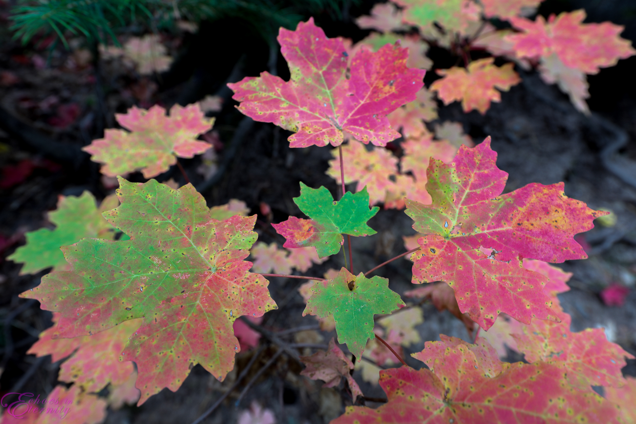 Fall Colors Mt. Lemmon Tucson Arizona Landscape Photographer 06