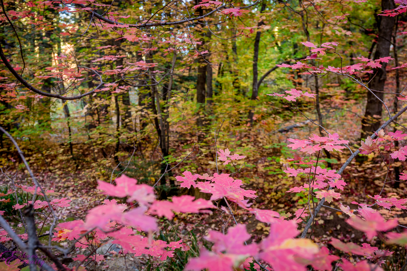 Fall Colors Mt. Lemmon Tucson Arizona Landscape Photographer 08