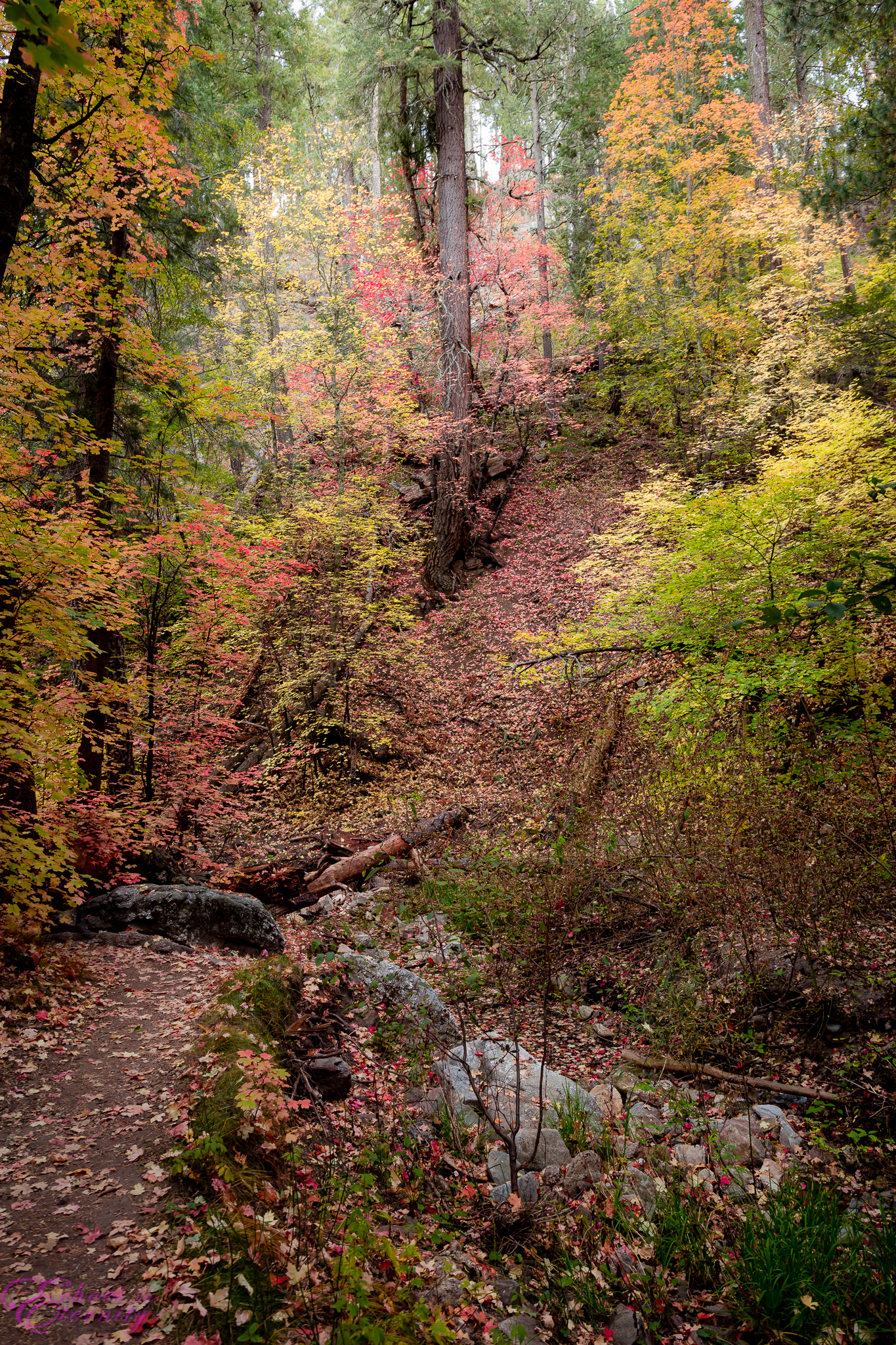 Fall Colors Mt. Lemmon Tucson Arizona Landscape Photographer 99