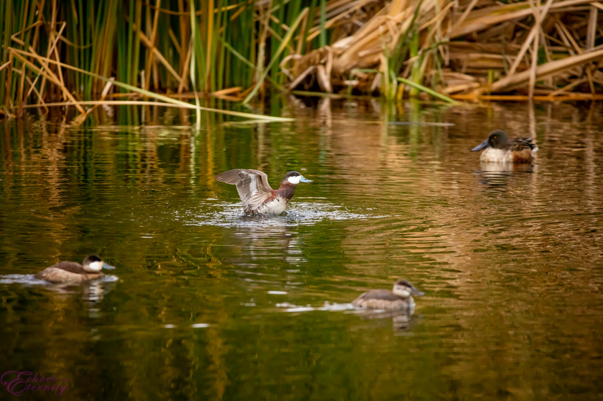 Tucson Wildlife and Waterfowl Photography 07