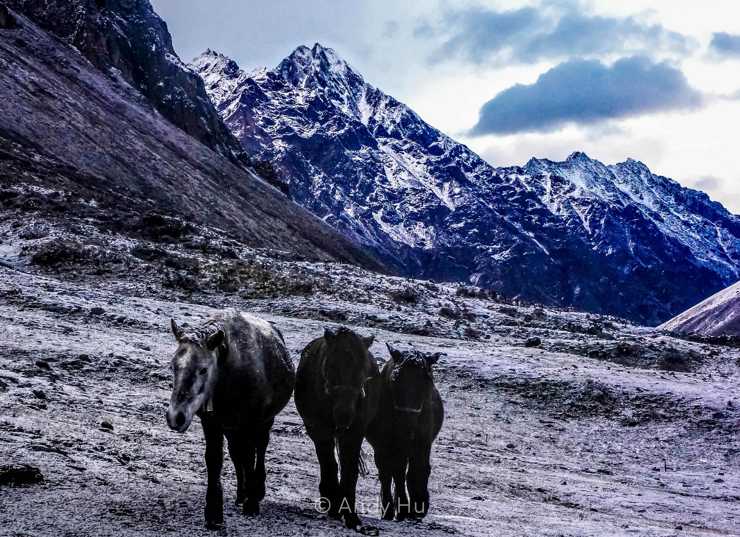 Horses, Mt. Gongga Trek