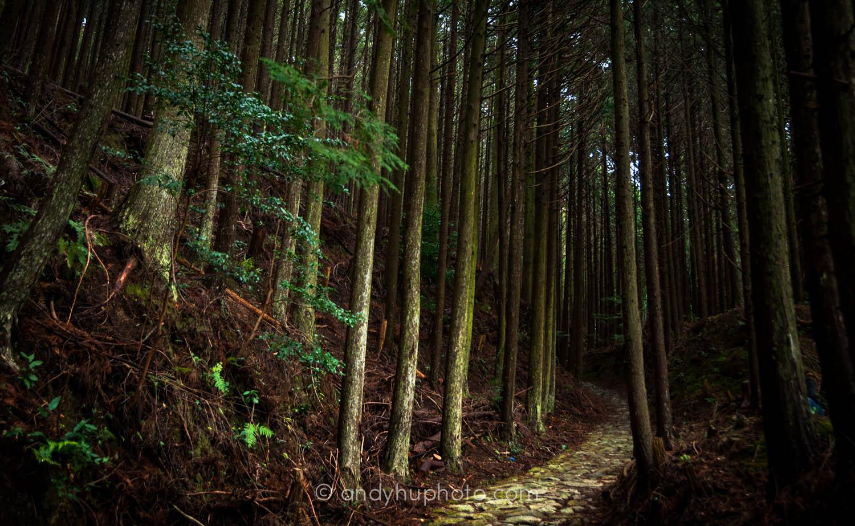 Nakahechi Trail-Kumano Kodo Trek