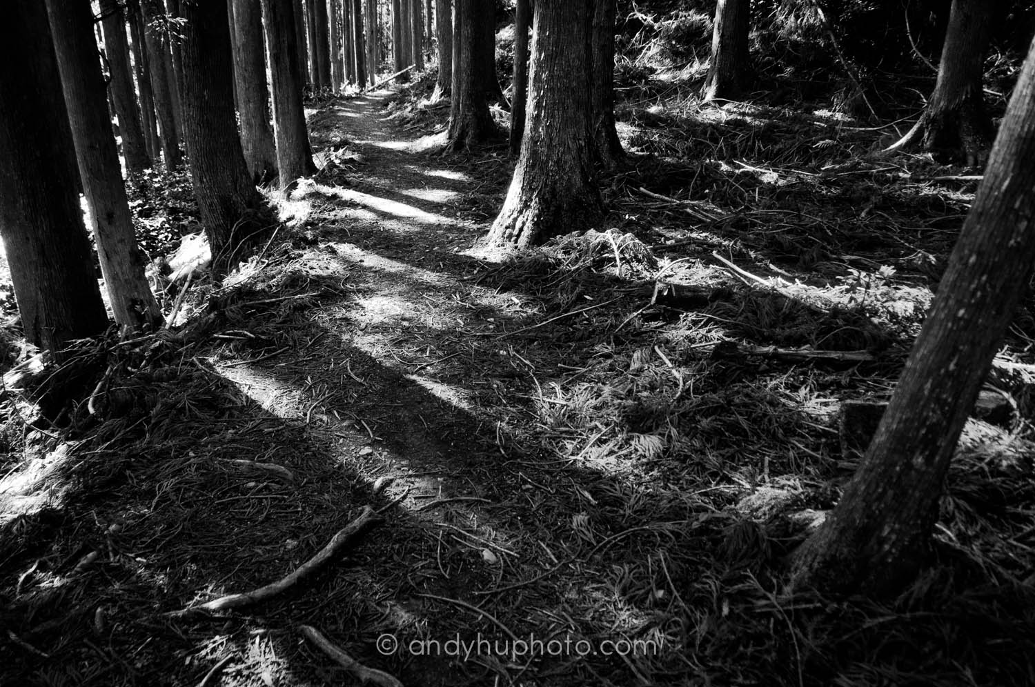 Black and white forest-Kumano Kodo Trek