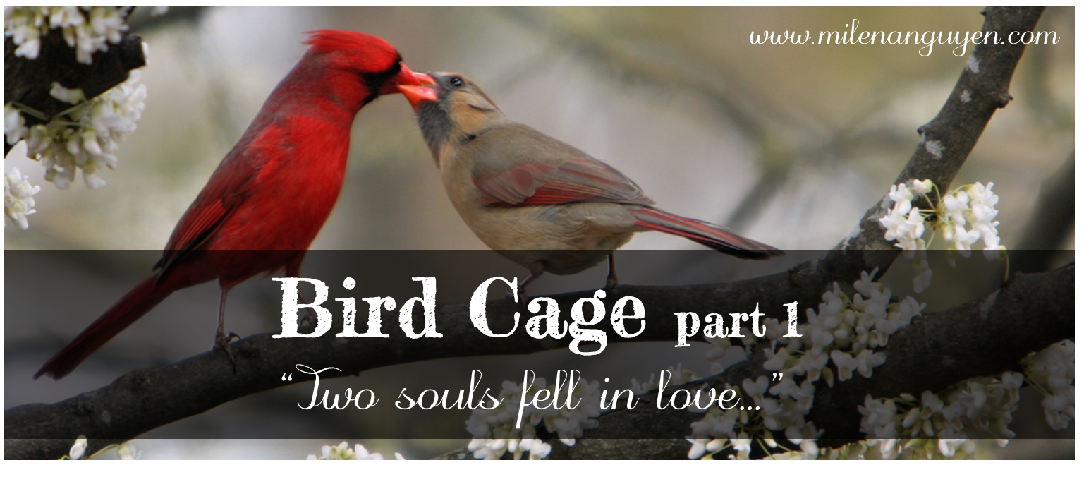 bird-cage-1.png
